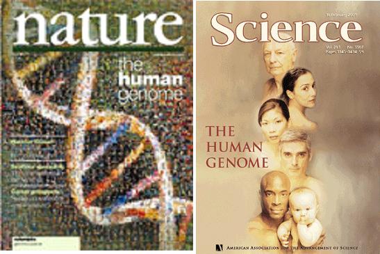 Curso de gen tica grado gen tica de la uab plataforma for En 2003 se completo la secuenciacion del humano