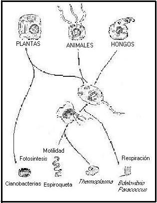 celula procariota y eucariota. de la célula eucariota